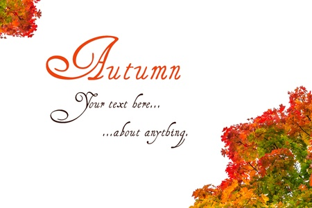 Autumn greeting card on colorful maple leaves background with place for text  Stock Photo - 15469497