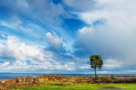 Lonely tree at sea Stock Photo - 15982709