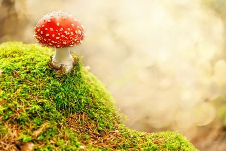 森のベニテングタケ