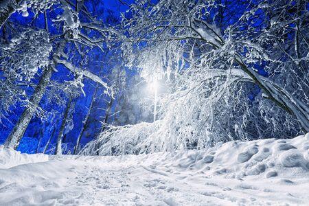 Winter road lit with streetlight at a winternight Stock Photo - 16710135