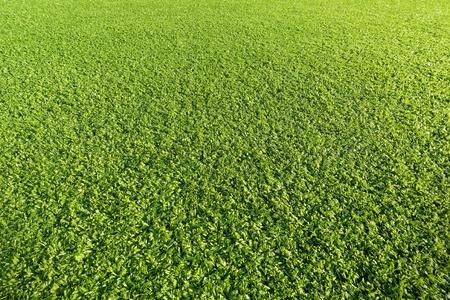 matiere plastique: Artificial Grass Field en mati�re plastique