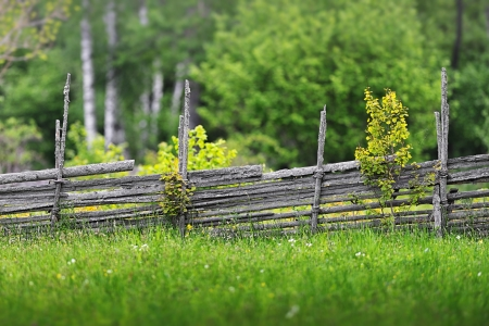Summer meadow with flowers and a wooden fence in the countryside, Sweden Standard-Bild