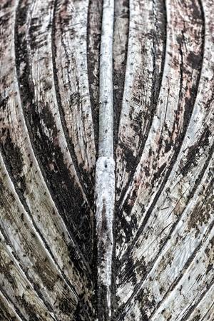 keel: Keel of an old vintage wooden boat