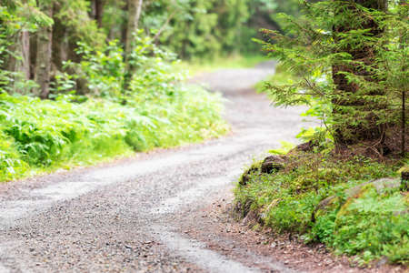 Winding country gravel road in forest Stock Photo