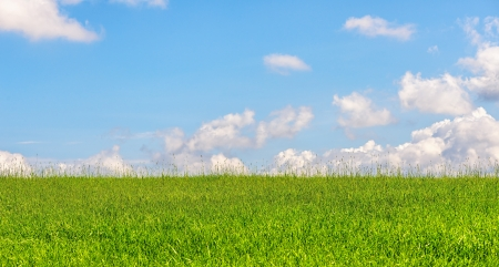 Green wheat field during summer with blue sky with some clouds photo