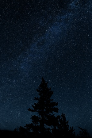 milkyway: Milkyway with a pinetree in the foreground
