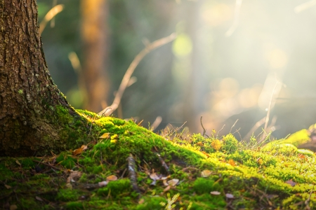 Forest floor in autumn with ray of light and green moss