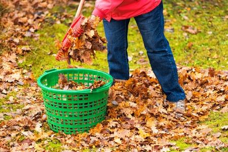 緑のバスケットの葉秋のクリーンアップ 写真素材