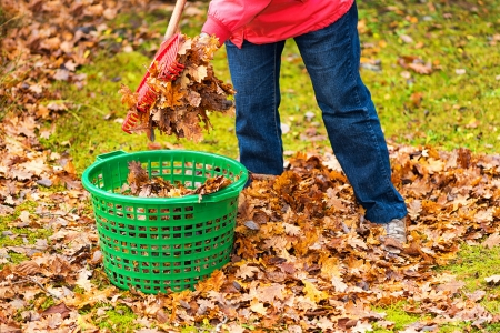 Cleaning up autumn leaves in a green basket Foto de archivo