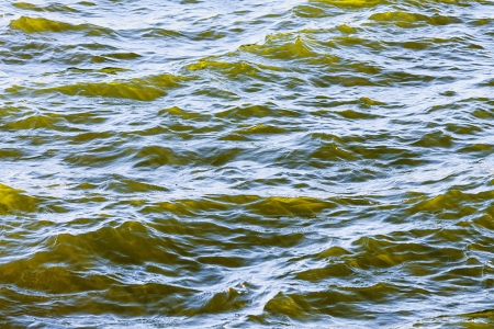 brackish water: Detail of fresh brackish green water ouside of Stockholm