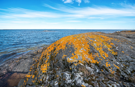 Orange moss or lava on a rock at the Baltic coast, Sweden photo