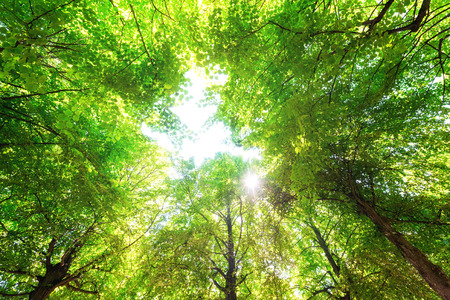Green leaves with a bright sun shining through  Stock Photo