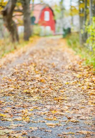未舗装の道路、オレンジ落ち葉と紅葉の木、背景が赤の木造住宅、スウェーデン