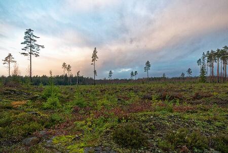 deforestacion: �rea de deforestaci�n durante la noche, Suecia