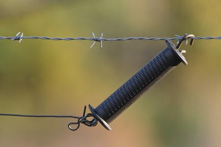 elektrischer Zaun: Griff f�r einen Elektrozaun, der eine Weide des gr�nen Grases sch�tzt