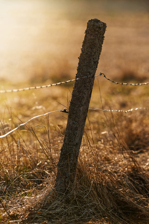 Old fence pole with barbed and electrical wire for livestock during sunset over a pasture, Sweden photo