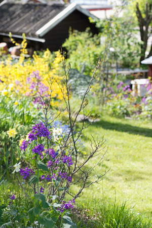 Colorful garden during a sunny spring day, Sweden