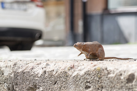 smallest: STOCKHOLM - JULY 01, 2015: Sculpture of a rat or rodent at Hornsgatspuckeln. The bronze sculpture is Stockholms smallest.