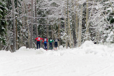 nordic ski: STOCKHOLM, SWEDEN - JAN 24, 2016: Group of ski runners in the forest during the Ski Marathon in nordic skiing classic style. Lida in Stockholm.