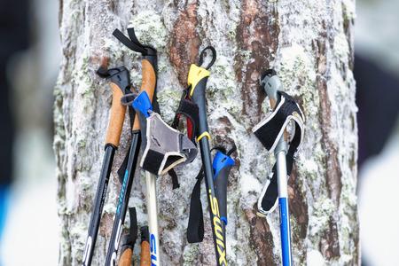 nordic ski: STOCKHOLM, SWEDEN - JAN 24, 2016: Ski poles at a tree trunk. Ski Marathon in nordic skiing classic style.