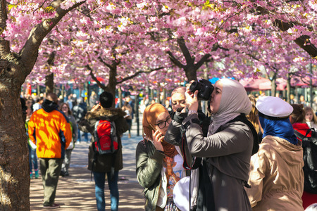 lunchtime: STOCKHOLM, SWEDEN - APRIL 29, 2016: Springtime in Kungstradgarden with happy people during lunchtime at the pink cherry trees.