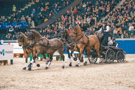 SOLNA, SWEDEN - NOV 27, 2016: Boyd Exell at the FEI World Cup Driving final in the Sweden International Horse Show at Friends arena.