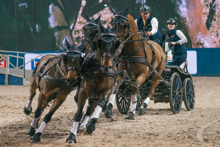 ソルナ, スウェーデン - 2016 年 11 月 27 日: ボイド Exell FEI 世界カップ運転友人アリーナでスウェーデン国際馬ショーの最終で。 報道画像