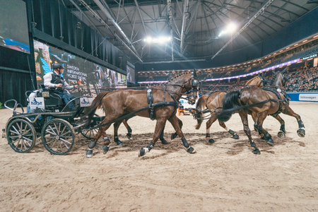 SOLNA, SWEDEN - NOV 27, 2016: Rainer Duen at the FEI World Cup Driving final in the Sweden International Horse Show at Friends arena.