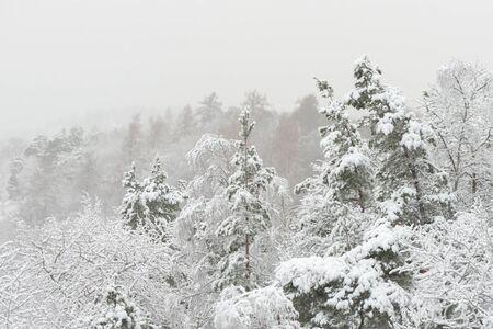 sweden in winter: Snow covered winter landscape during snowfall. Sweden