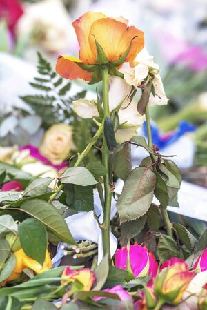 solid: STOCKHOLM, SWEDEN - APRIL 16, 2017: Closeup of a rose at the flowerbed in Sergels torg after the terror attack on the 7th of april.