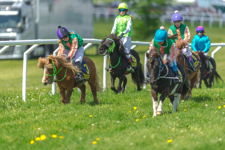 compete: STOCKHOLM, SWEDEN - JUN 6, 2017: Ponys racing at full speed at Gardet. National day 6th of june.