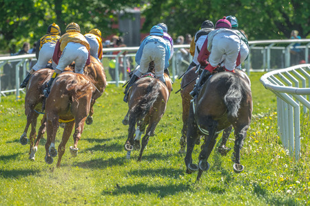compete: STOCKHOLM, SWEDEN - JUN 6, 2017: Back of horses with jockeys out of a curve in fast pace at Nationaldagsgaloppen at Gardet.
