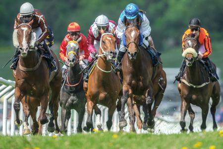 ストックホルム, スウェーデン - 2017 年 6 月 6 日: 行高速ストレートで騎手と馬の Gardet で Nationaldagsgaloppen ペース。