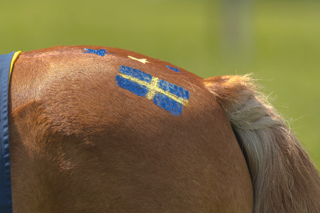STOCKHOLM, SCHWEDEN - 6. JUNI 2017: Dekorationen auf den Ponys, die bei Gardet laufen. Nationalfeiertag 6. Juni.