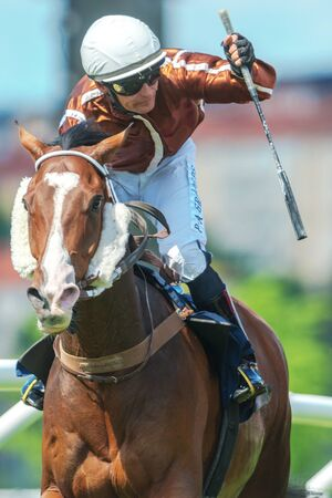 compete: STOCKHOLM, SWEDEN - JUN 6, 2017: Closeup of a jockey on a racehorse in fast pace at Nationaldagsgaloppen at Gardet. Editorial