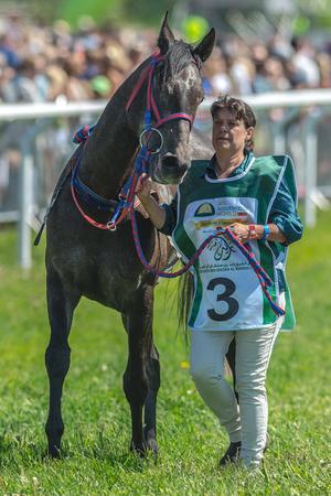 compete: STOCKHOLM, SWEDEN - JUN 6, 2017: Horses in the vault at Nationaldagsgaloppen at Gardet. Editorial