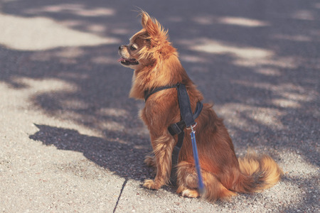Dog waiting for the owner that left a moment ago. Sunlit and with shadows and leach