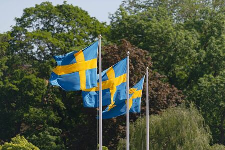 Three swedish flags in blue and yellow blowing in the wind with green tree background. National day June 6