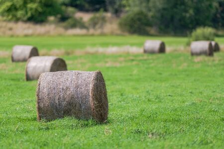 Hay bales on a green cropfield during a late summer day. Sweden 写真素材