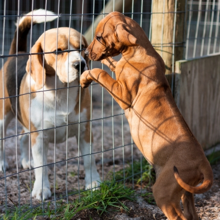 animal shelter: Dogs greeting in animal shelter
