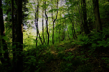 Forest in the Mountain. Stock Photo