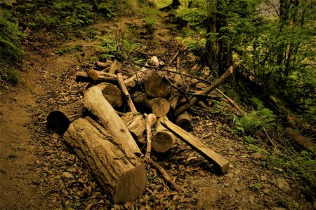 Firewood in the forest path. Italy 2017 Banco de Imagens
