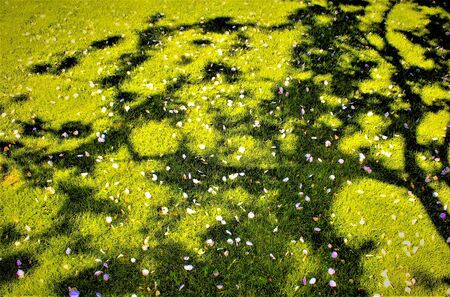 Green meadow with white flowers scattered. 2017 Banco de Imagens