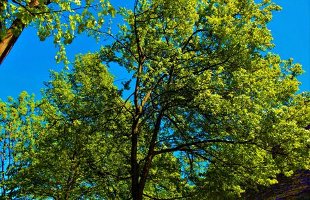 Trees in the path and the blue sky. Italy 2017 Banco de Imagens