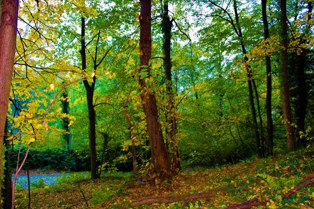 Trees in the autumn forest. Banco de Imagens