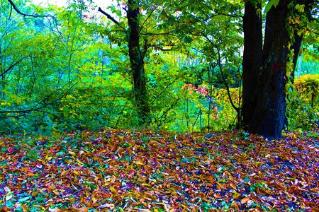 Autumn leaves in the path. Italy 2017 Banco de Imagens