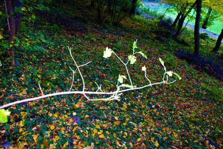 Twig in the autumn forest. Italy 2017 Banco de Imagens