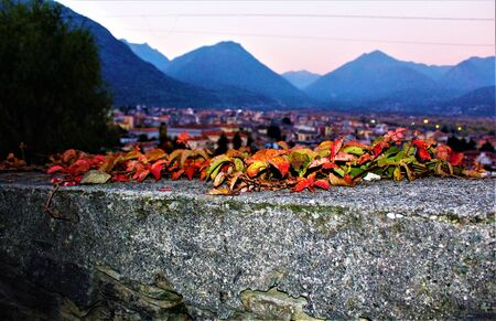 Autumn leaves with a view of the city of Domodossola, Piemonte, Italy 2017