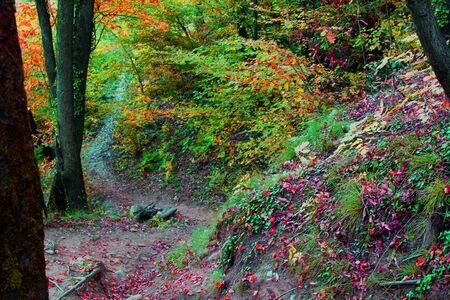 Path in the autumn forest. Italy 2017 Banco de Imagens
