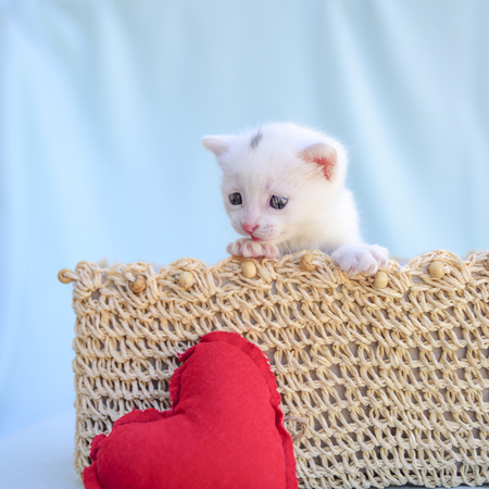 little white kitten inside a wicker basket looks at a red heart Stock fotó